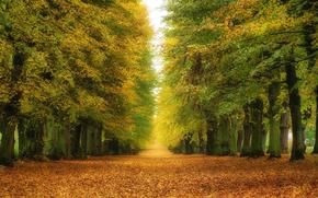 trees, road, autumn, landscape