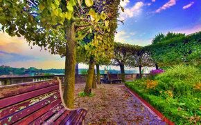 парк, деревья, лавочки, дорога, клумба, пейзаж