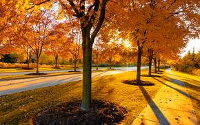 stradale, alberi, autunno, paesaggio