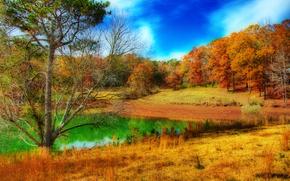 lago, alberi, foresta, autunno, paesaggio