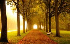 autumn, road, park, trees, A bench, landscape