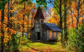 осень, лес, деревья, заброшенный дом, пейзаж