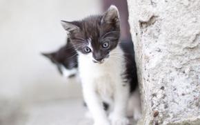 kitten, baby, wall