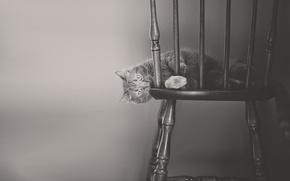 кот, кошка, стул, монохром, чёрно-белая