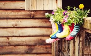 сапоги, вазоны, цветы, сарай