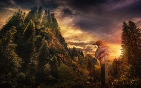 uccello, raven, Montagne, foresta, alberi, tramonto