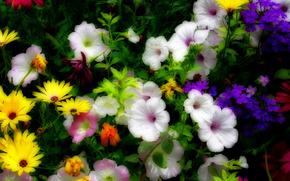 клумба, цветы, флора