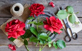 Roses, scissors, thread, foliage