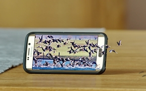 Samsung Galaxy S6 Edge, Samsung, SMARTPHONE, naturaleza, pájaros