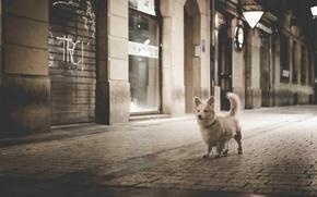 cane, pecorina, pavimentazione, la vita notturna della città, Passeggiata attraverso la città, Mono, in bianco e nero