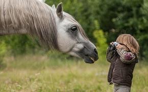caballo, caballo, Hocico, GRIVA, chico, fotógrafo, Paparazzi, cámara