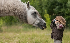 Pferd, Pferd, Schnauze, GRIVA, Junge, Fotografen, Paparazzi, Kamera