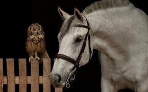 horse, horse, Snout, owl, bird