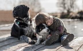 мальчик, собаки, друзья, настроение