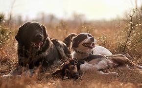 Dog, Friends, recreation