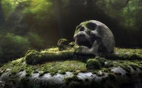 cimitero, monumento, cranio