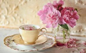Flowers, Peonies, Petals, cup, saucer