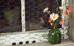 полевые цветы, ромашки, букетик, пузырёк, окно
