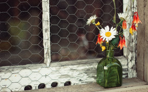 Flores silvestres, Camomila, corpete, bolha, janela