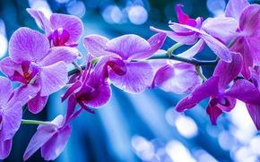 orchid, exotics, branch, Macro