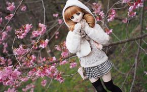 bambola, giocattolo, Sakura, ciliegia, fioritura, FILIALE