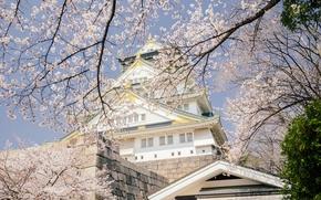 Osaka Castle Park, Osaka Castle, Osaka, Japan, Осака, Япония, замок, деревья, сакура, вишня, цветение, ветки, весна