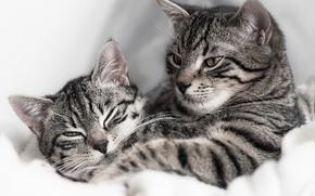 кот, кошка, парочка
