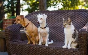 Dog, COTE, cat, Trinity, Friends