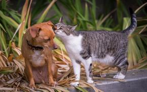 cane, gatto, ultime notizie, orecchio
