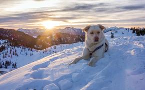 Alps, Austria, Альпы, Австрия, горы, зима, снег, природа, собака, пёс