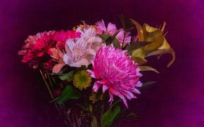 букет, цветы, флора