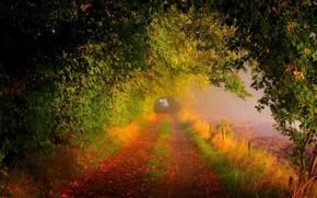 otoño, carretera, árboles, niebla