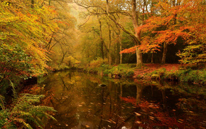 autumn, forest, trees, pond, nature