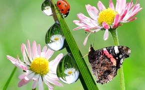 травинка, роса, капли, бобочка, божья коровка, цветы, макро