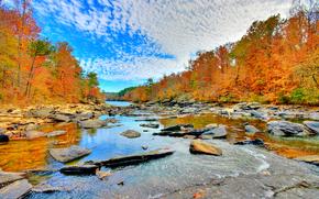 autunno, fiume, pietre, foresta, alberi, paesaggio
