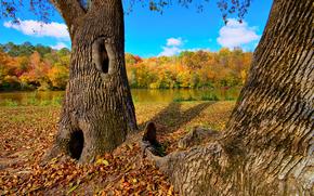autunno, fiume, foresta, alberi, paesaggio