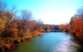 fiume, autunno, foresta, alberi, paesaggio