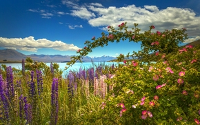 lake, Mountains, Flowers, lupine, briar, beauty