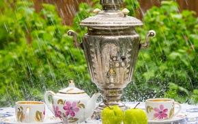 crockery, samovar, cup, apple, rain
