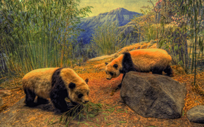 Pandas, bambú, bosque