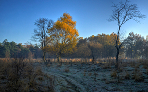 sky, morning, frost, autumn, trees, nature, forest