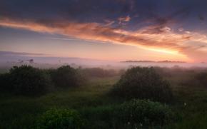 Russia, mattinata, nebbia, cielo, nuvole, chiaro, erba, cespuglio