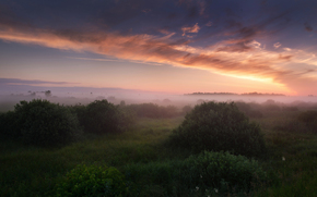 Russia, morning, fog, sky, clouds, light, grass, bush