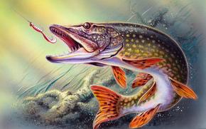 рыба, щука, вода, крючок, рыбалка, рисунок