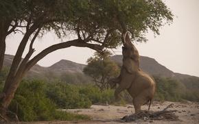 саванна, Африка, хобот, природа, слон, деревья