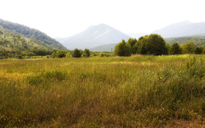 Russia, Kamchatka, Mountains, Forests, trees, field, meadow, grass