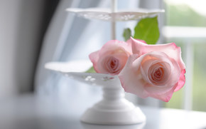 Roses, vaso, tenerezza, bokeh
