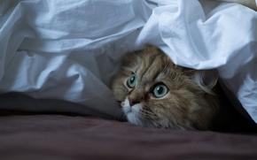 gatto, museruola, visualizzare