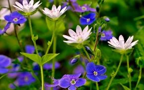 summer, meadow, Macro