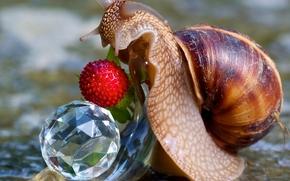 Macro, berry, snail